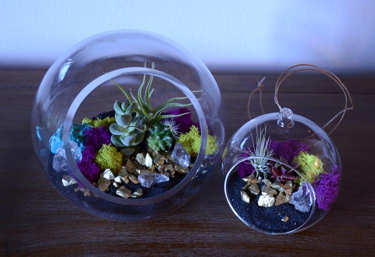 combinacion suculentas cactus muebles madera