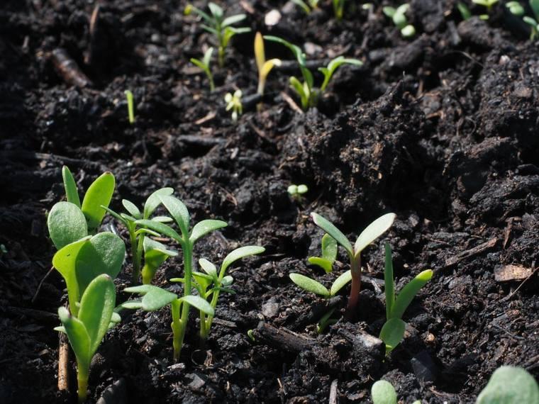 cuidados plantas cultivo jardin