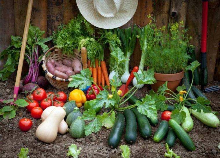 huerto casero frutas hortalizas