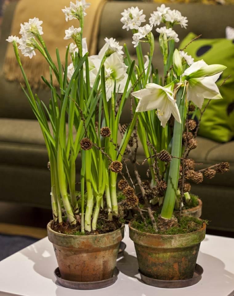 flores de primavera decorar casa amarilis blanco macetas ideas