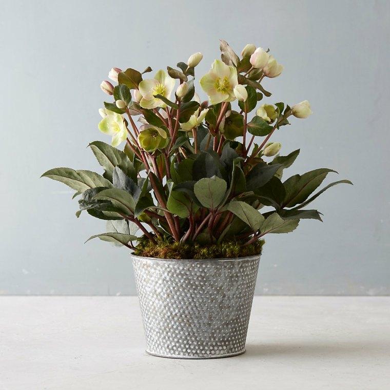 flores de primavera decorar casa eleboro maceta ideas