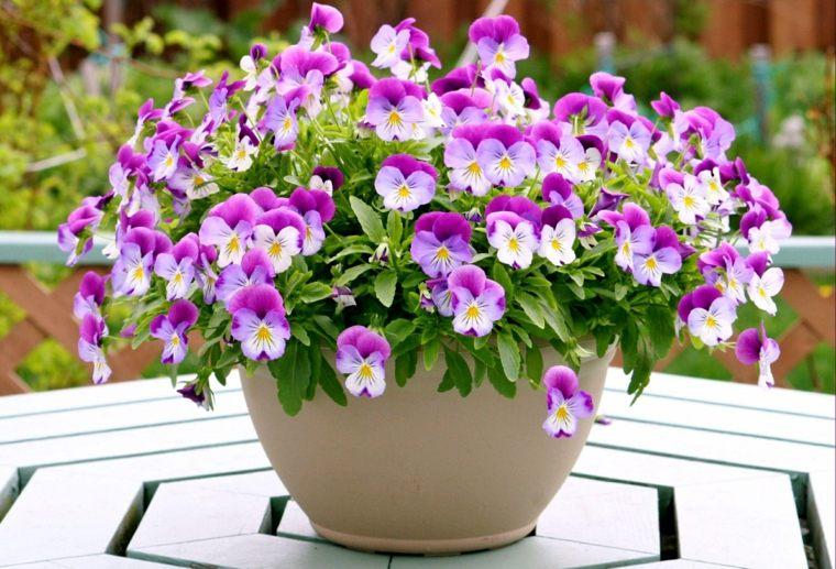 Flores Para Decorar En Primavera