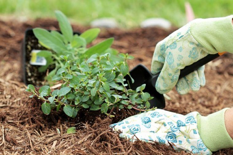 formas sembrar especias frescas jardín