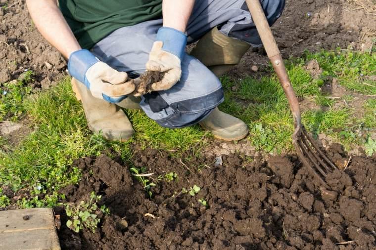 ideas plantar especies plantas jardin