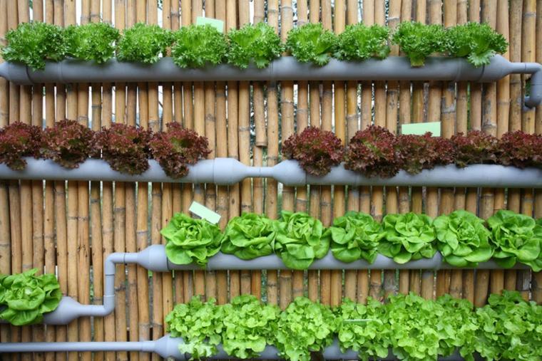 jardineras verticales tuberías lechugas terraza