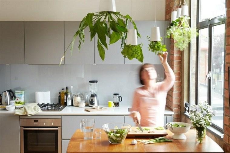 macetas colgantes hierbas naturales cocina