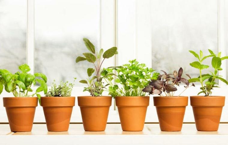 Especias naturales cultivadas en tu propio hogar 24 ideas for Macetas para cocina