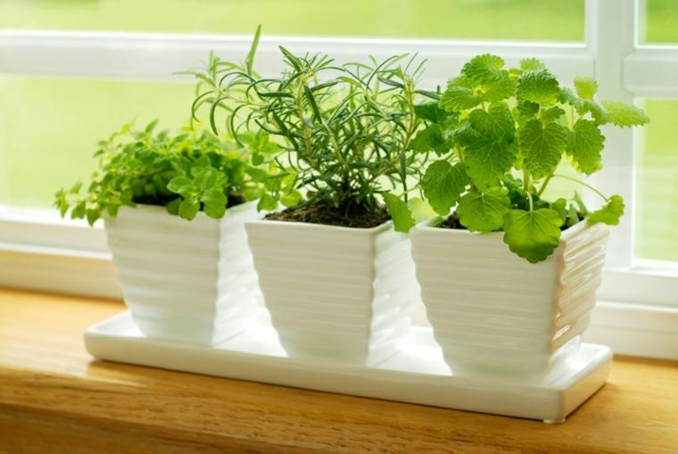 macetas blancas plantas interior