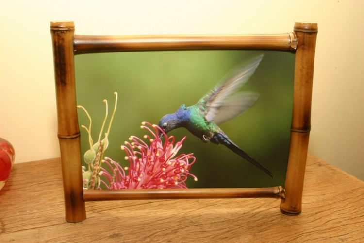 marco enmarcado pajaro natural cuadros