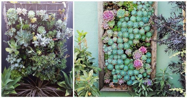 originales jardines verticales plantas suculentas