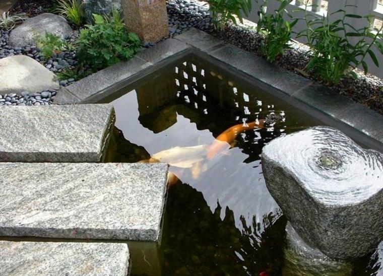 peces colores pequeños ideas diseño