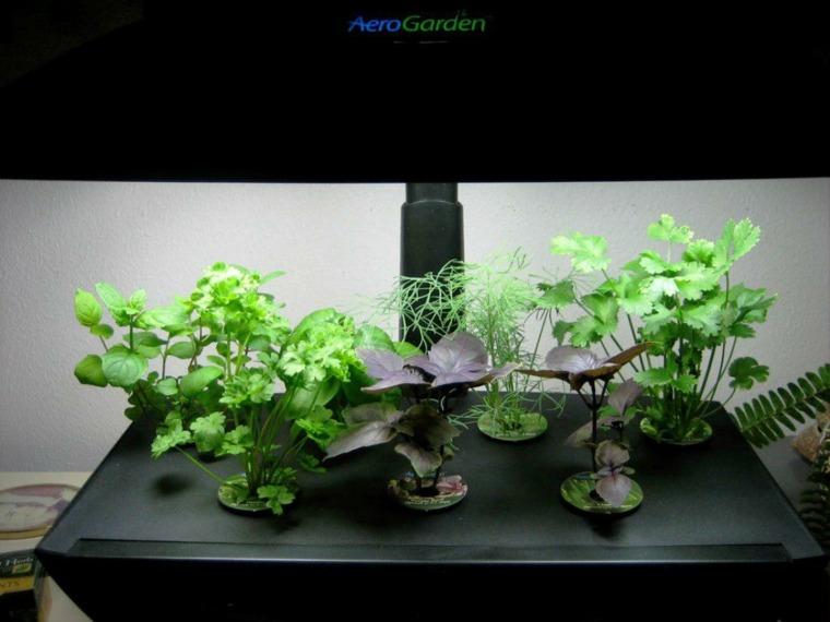plantador especial macetas hierbas cocina