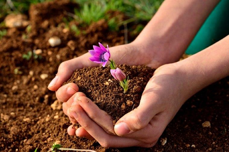Tierra para cultivar - consejos útiles para preparar el suelo -