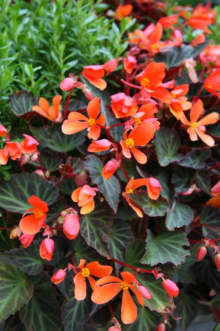Plantas de sombra 9 opciones para el jard n for Matas de jardin