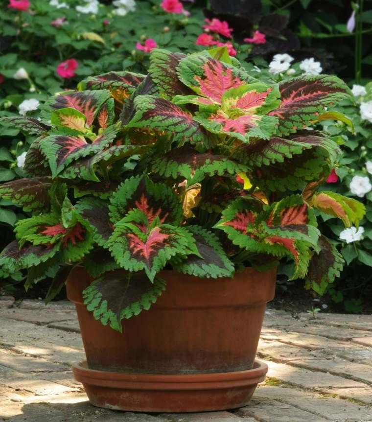 Plantas de sombra 9 opciones para el jard n for Plantas decorativas de exterior