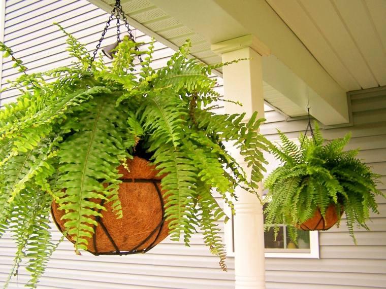 Helechos en macetas colgantes jardiner a helloforos for Arreglo de jardines exteriores