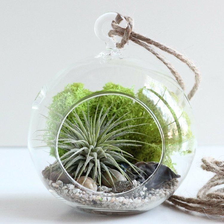 plantas diseño funciones esferas pequeñas