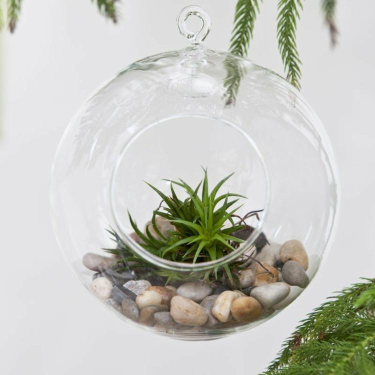 plantas diseño globo colgantes colgantes