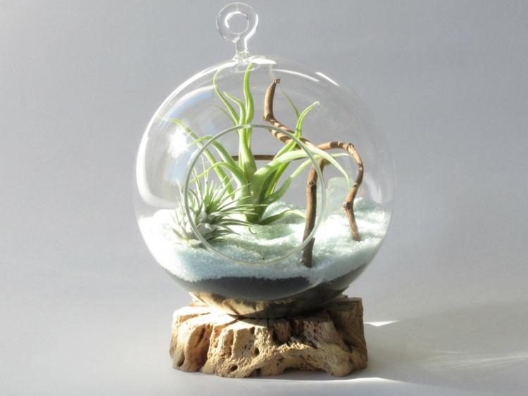 plantas diseño suelos cristales troncos