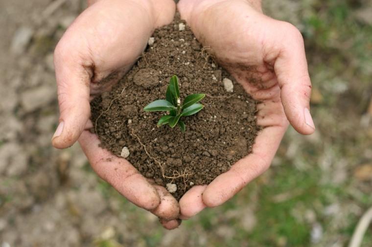 puñado tierra planta pequeña viva