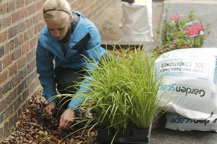 sembrar plantas huerto preparar terreno