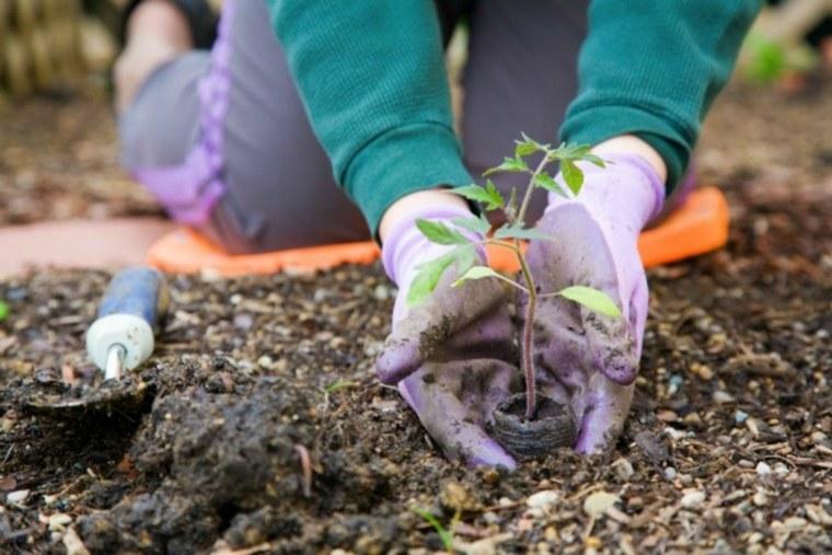 sembrar plantas suelo jardin deco