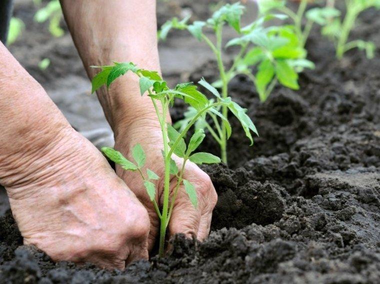 sembrar plantas terreno preparado abonado