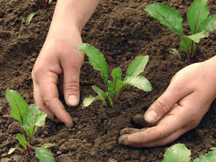 plantar sembrar flores plantas