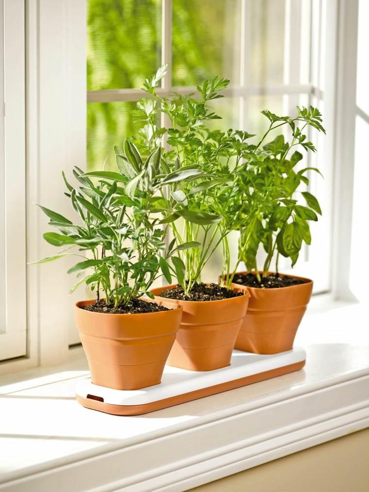 tres macetas plantas ventana barro