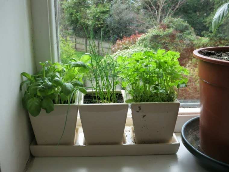tres macetas plantas ventana deco