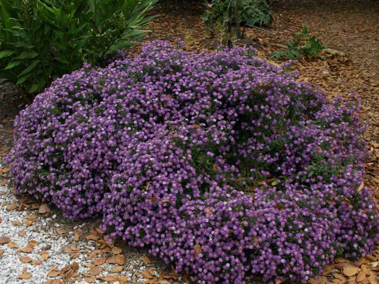 arbusto florecillas color morado jardín
