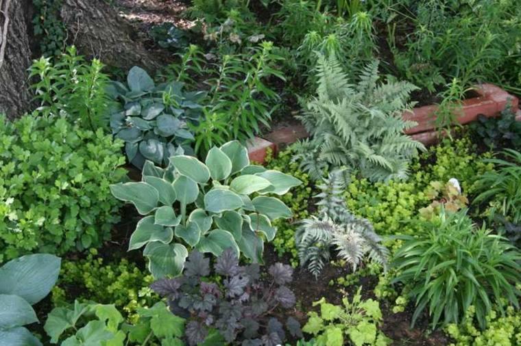 bonita seleccion plantas tapizantes jardin