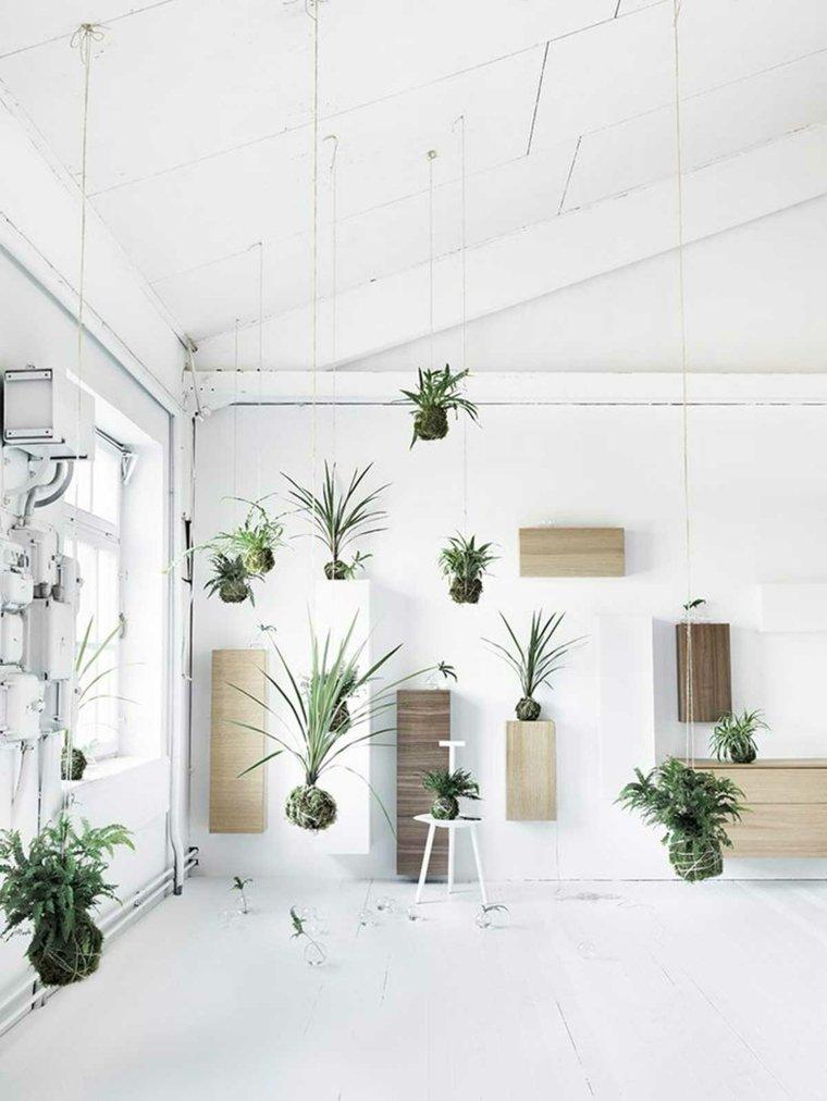 decorar con plantas opciones colgantes interesantes ideas