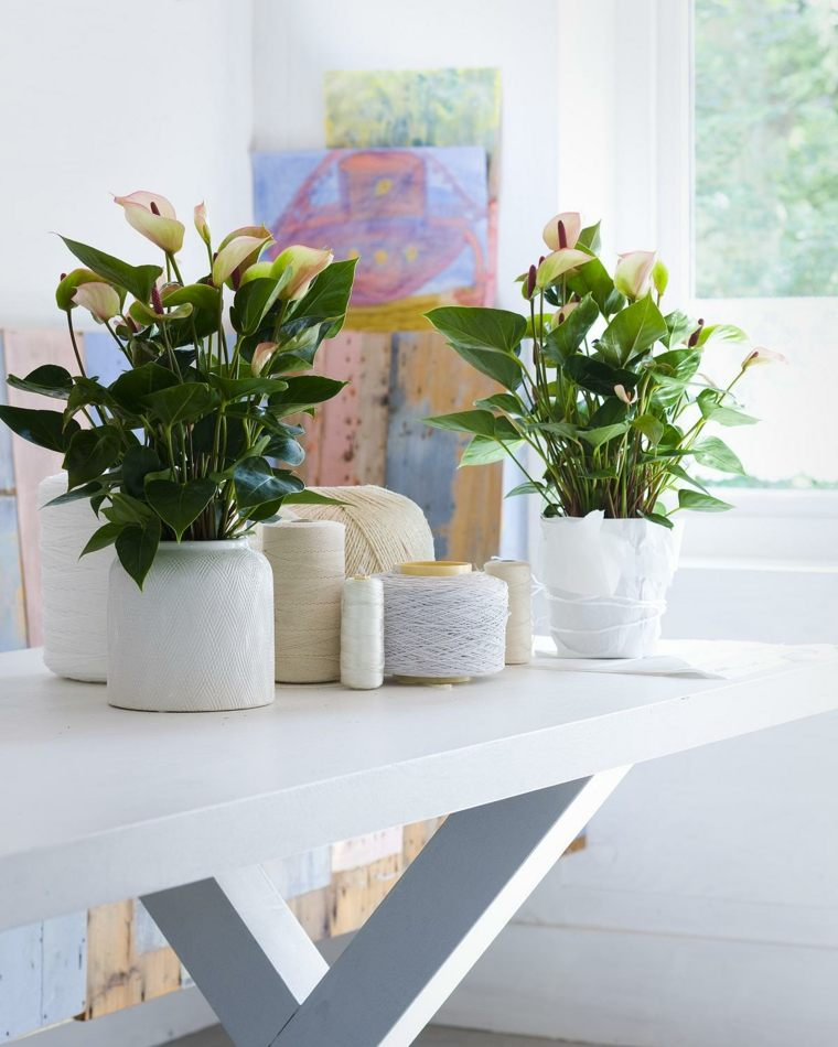 decorar con plantas opciones macetas blancas estilo elegante ideas