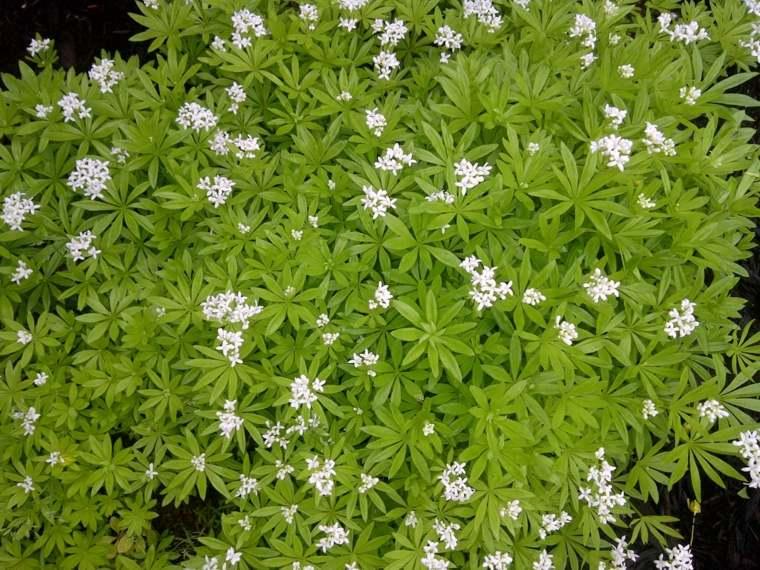 decorar suelo jardin flores blancas