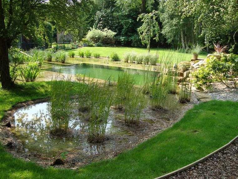 estanque piscina plantas filtro