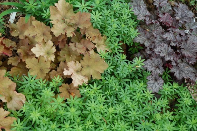 plantas y flores tapizantes para los suelos del jardn