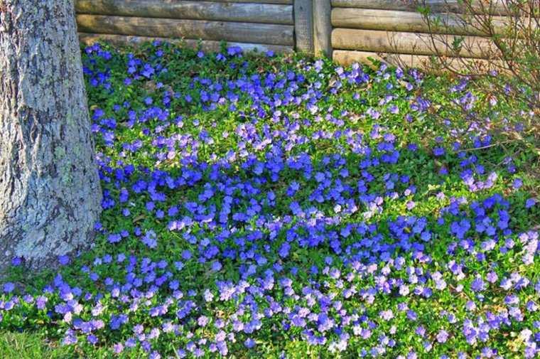 Plantas y flores perfectas para cubrir el suelo de tu jard n for Cubrir suelo terraza