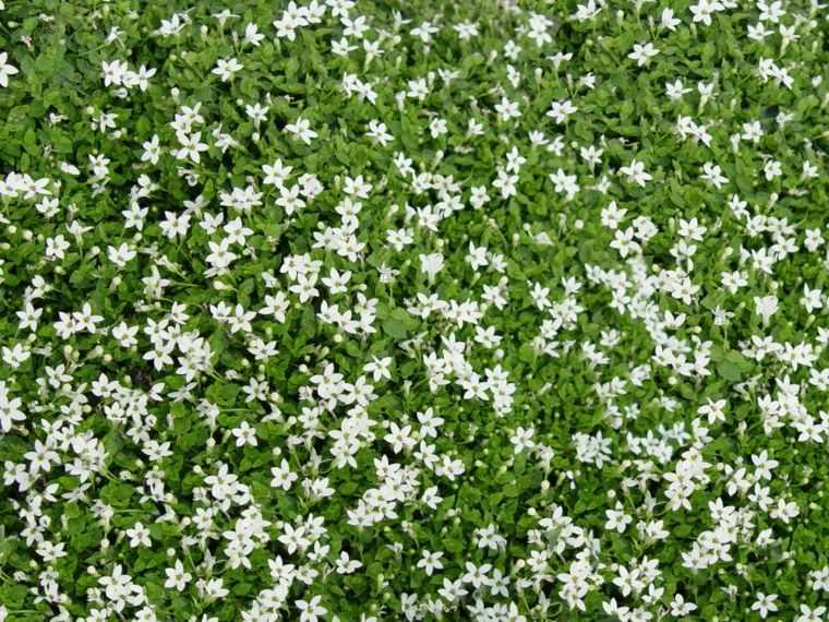 florecillas blancas suelo jardin deco