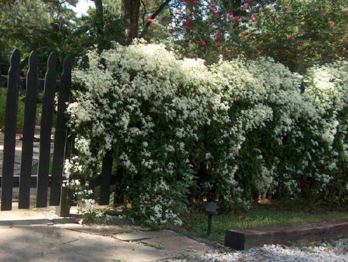 flores especies colores blancos muros