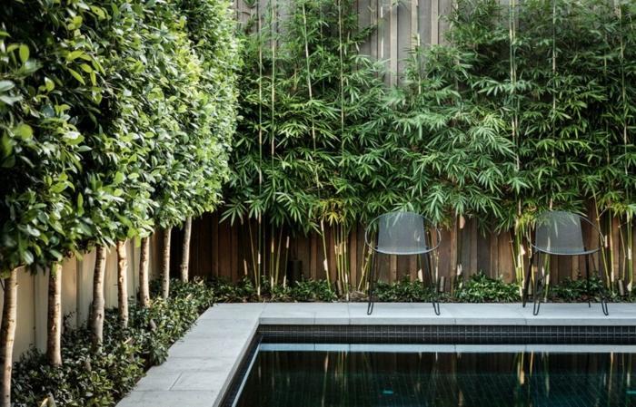 fotos de plantas seguridas espejos sillones