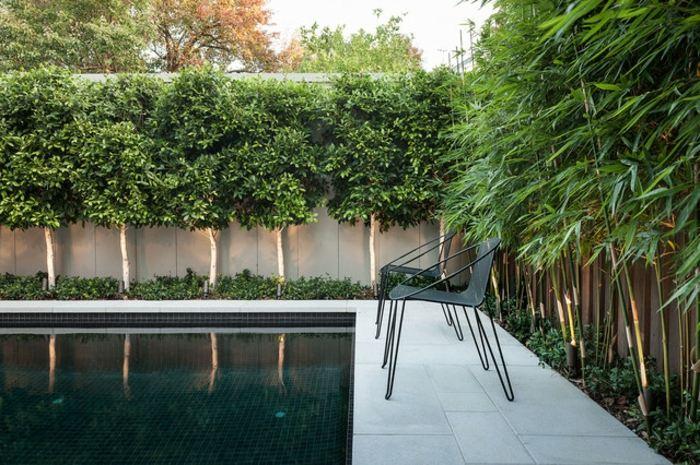 fotos de plantas sillones piscinas modernos