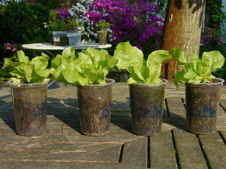 frutas verduras cultivar macetas lechuga ensalada ideas