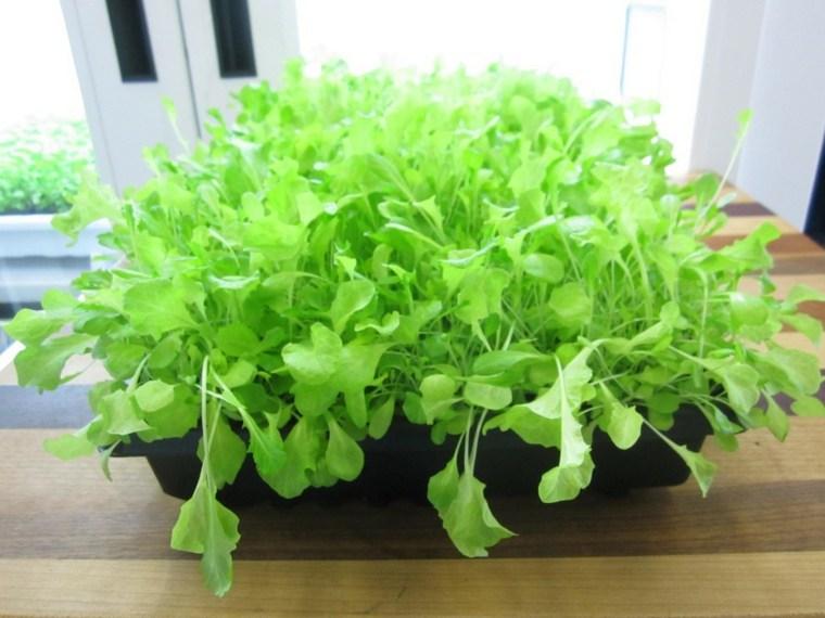 frutas verduras cultivar macetas lechuga ideas