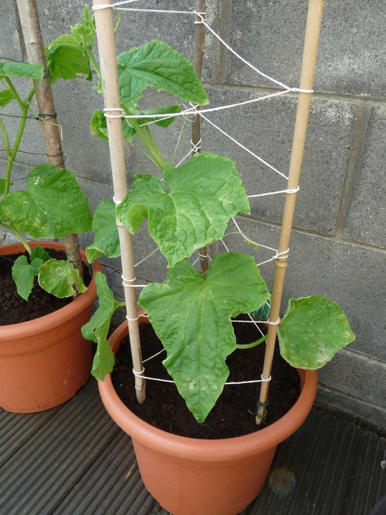 frutas verduras cultivar macetas pepinos palos madera ideas