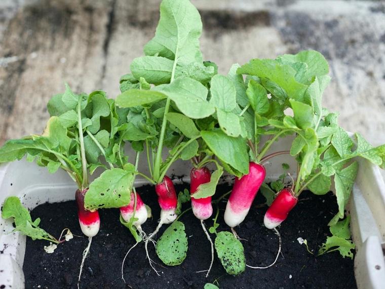frutas verduras cultivar macetas rabanos ideas