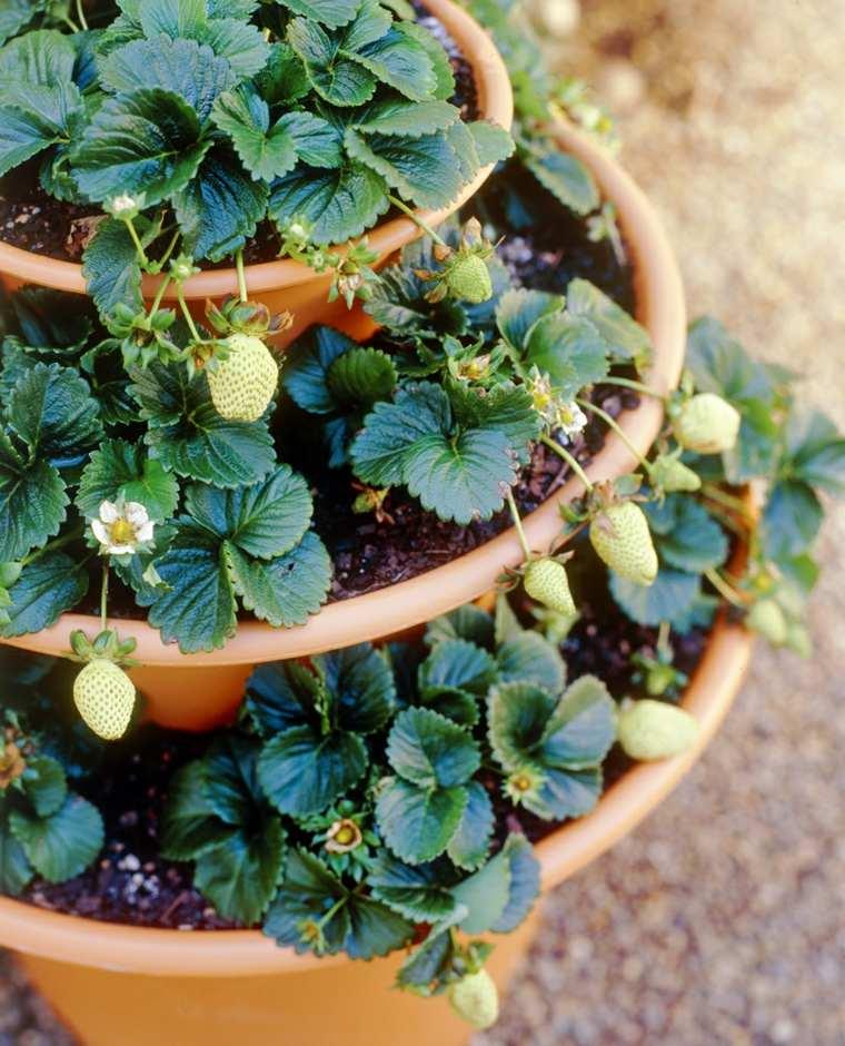 frutas y verduras cultivar macetas fresas rojas ideas