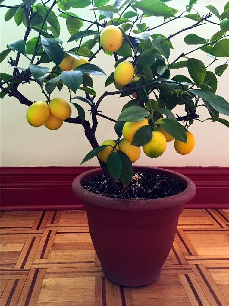 frutas y verduras cultivar macetas limon ideas