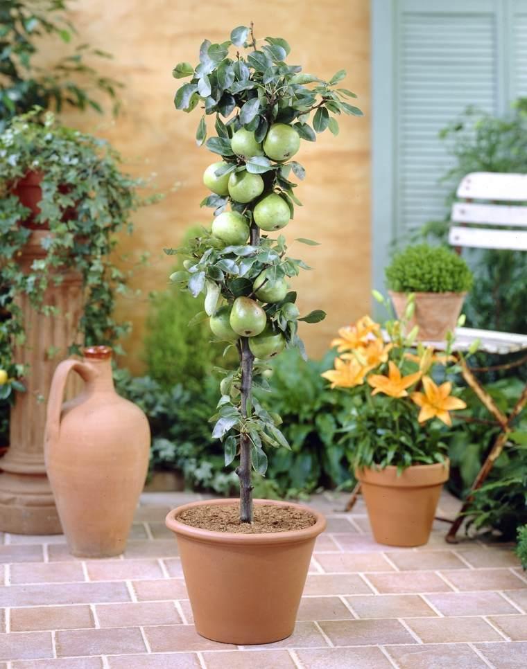 frutas y verduras cultivar macetas manzana pequena ideas