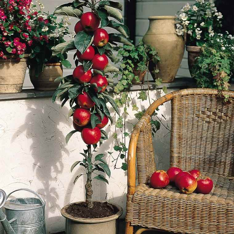 frutas y verduras cultivar macetas manzana ideas
